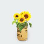 Zonnebloemen kweektuintje